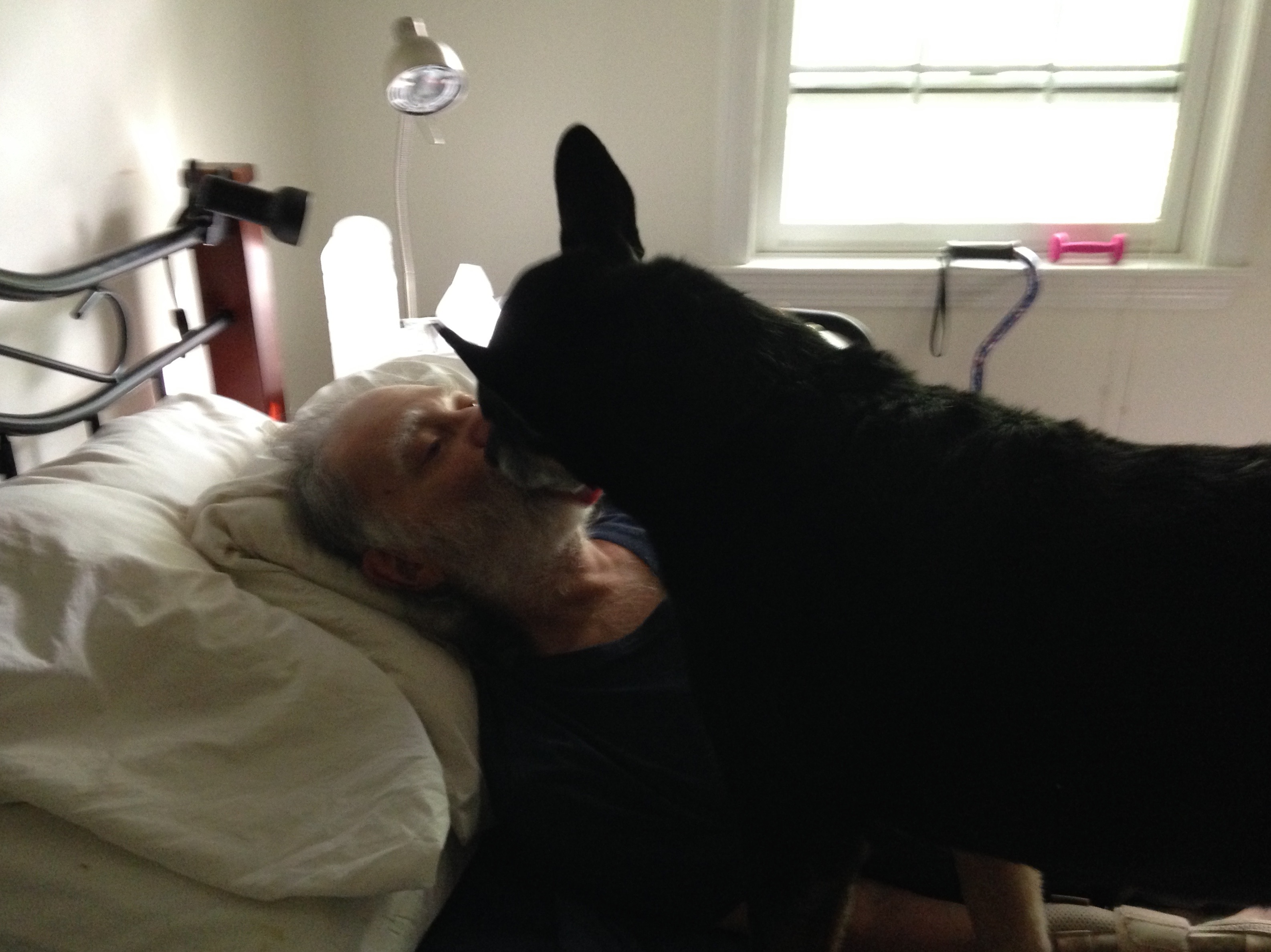french kissing dog